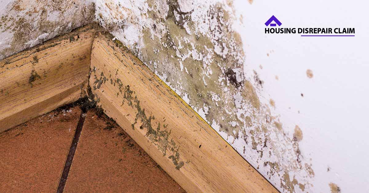 No Win No Fee For Housing Disrepair