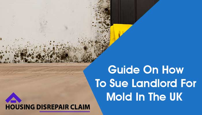 Sue Landlord For Mold UK